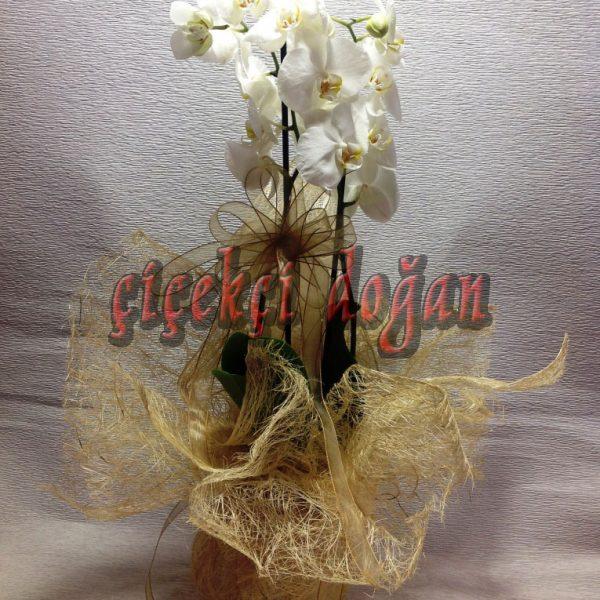 cido_orkide_ciftli